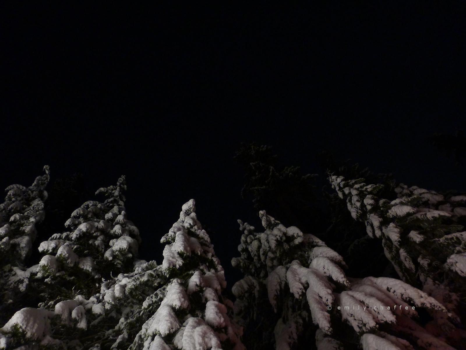 forest. oregon.